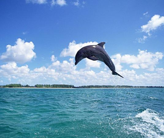 关岛海豚之旅旅游景点风景